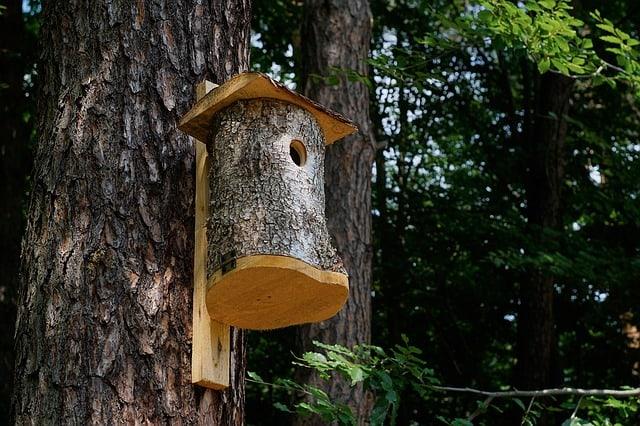 budowa-skrzynki-dla-ptakow-przyklad-1