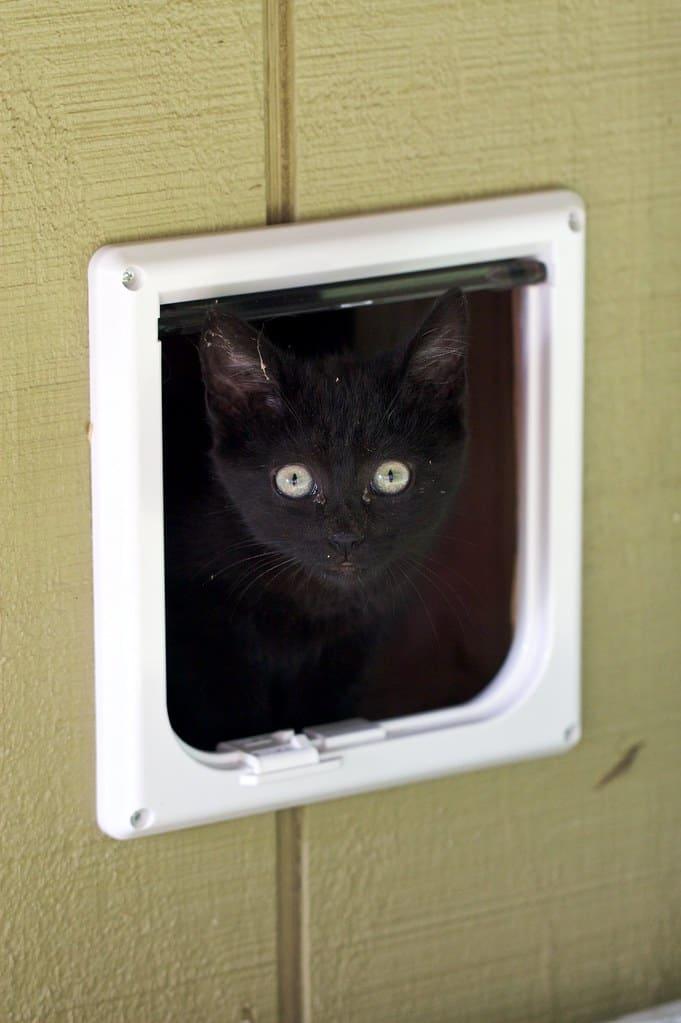 wejscie dla kota w drewnianych drzwiach
